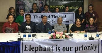 Thailand's elephant owners respond to New Zealand press attacks