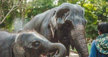 Northern Thailand elephant study
