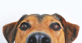 Four infectious diseases you may catch from your dog